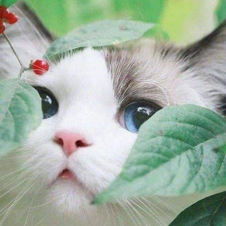 Lido di Ostia, Italien: La micia della nostra amica Isabella....che occhi!!!