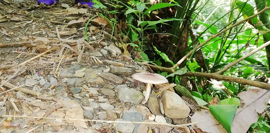 Tolima Department, Colômbia: Explendor de la naturaleza.