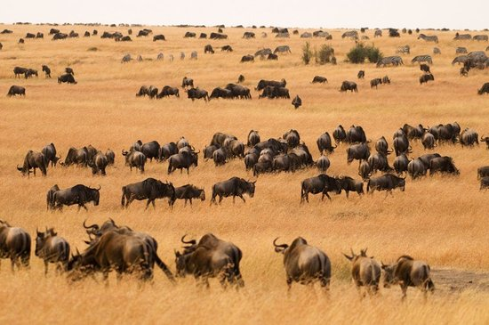 ‪‪Follow The Great Migration | 10 Days‬: photo from client‬