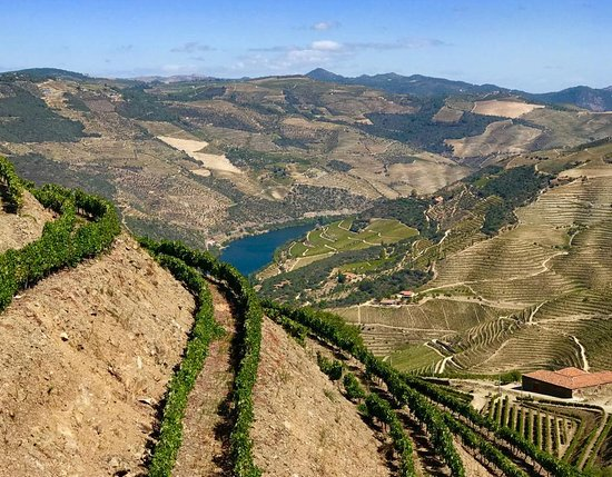 Ervedosa do Douro, Portugal: Waves of vineyards.