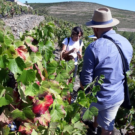 Ervedosa do Douro, Portugal: Talking about grapes with Mike&Louise