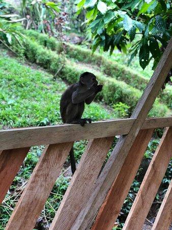 Tena, Ecuador: Our little guest