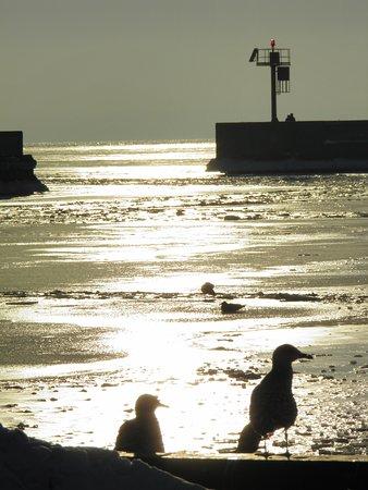 Hel, Poljska: Port Rybacki