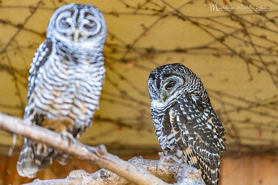 Tripadvisor - Uwielbiam ten park!! Szczególnie uwieczniać zwierzęta w nim! ( Z racji pasji i zawodu - Fotograf). Z przyjemnością tam chodzimy kilka razy  do roku i nadal się nie znudziło! Piękne klimatyczne