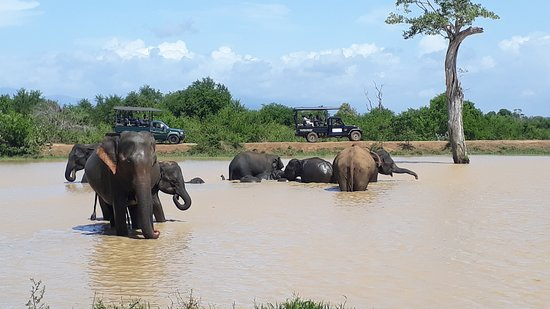 SRI LANKA CAR TOURS  Yala National Park