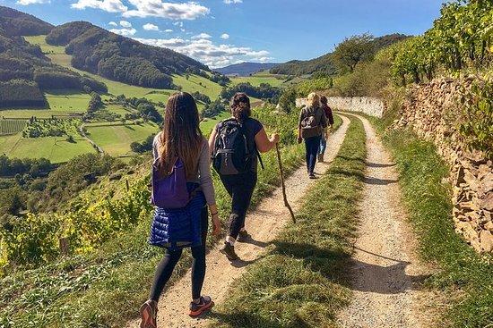 Wachau verdensarvvandring