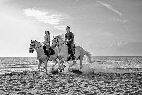 Marina di Grosseto海灘上的私人騎馬