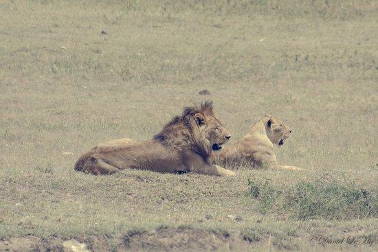 Ngorongoro Conservation Area, Tanzânia: Safari Trip with Tulivu Adventure