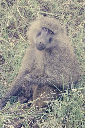 Ngorongoro, Tanzania: Safari Trip with Tulivu Adventure