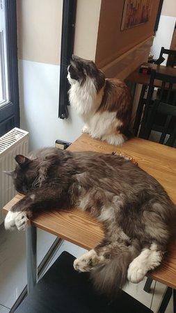 ζευγάρι προφίλ εραστής γάτα