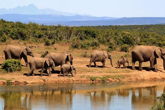Pascal Safaris