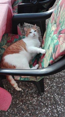 Agra, Sveits: uno dei 3 gatti davvero meravigliosi