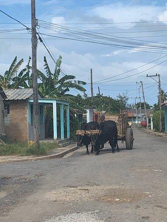 Puerto Esperanza – fénykép