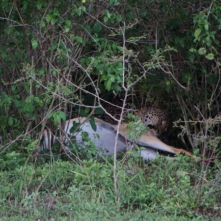 הפארק הלאומי בווינדי, אוגנדה: Pictures taken on a seven days Uganda safari.