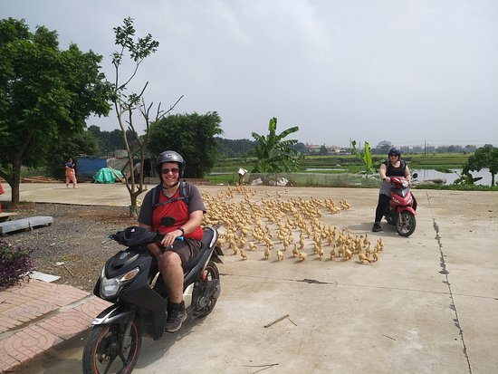 Ninh Thang, Vietnam: Our happy Riders from England! little ducks welcome them too:)