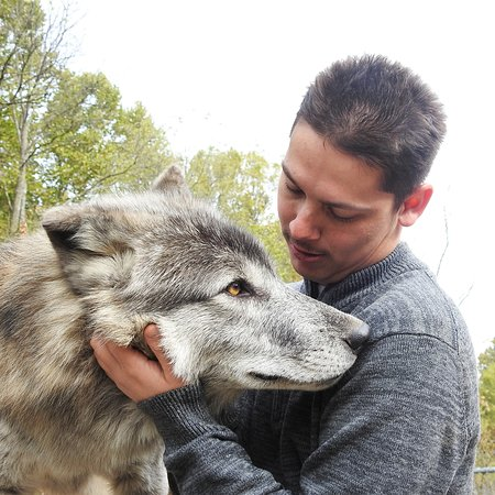 My son is obsessed with wolves.  What a perfect day!