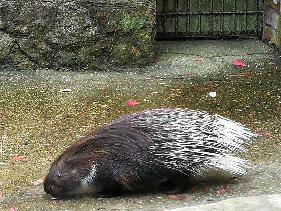 Piemajas Zoo Briezi