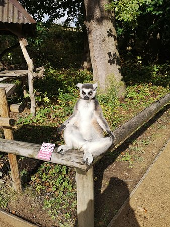 Relaxing Lemur - no you can't touch them!
