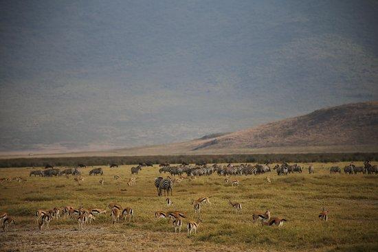 Moana Tanzania