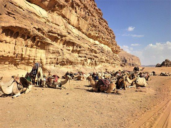Вади-Рам, Иордания: Compagni di avventura alla scoperta del deserto di Wadi Rum, in Giordania.