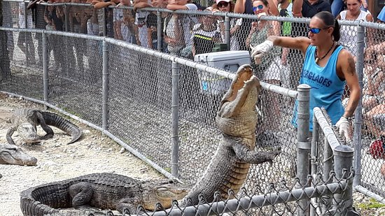 Florida Everglades Airboat Ride and Reptile Show: la pappa