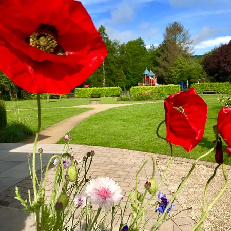 Poppies springing up on the park.