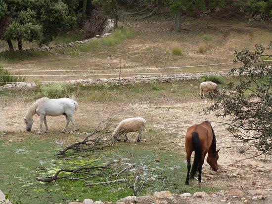 Los caballos de Asociación Arcadia
