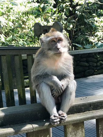 Loved our visit here, so lovely to walk amongst all these inquisitive monkeys and lovely environment, well worth a visit here.