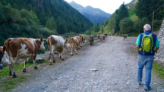 Bidet Della Contessa Picture Of Riserva Naturale Val Di Mello