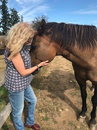 Nanaimo, Canada: Animal reiki treatments.