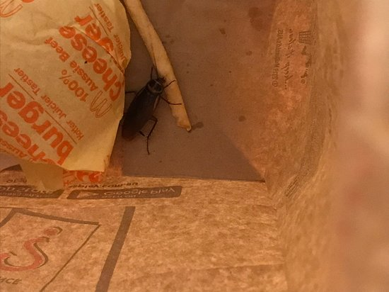 Pacific Pines, Австралия: cockroach in maccas bag
