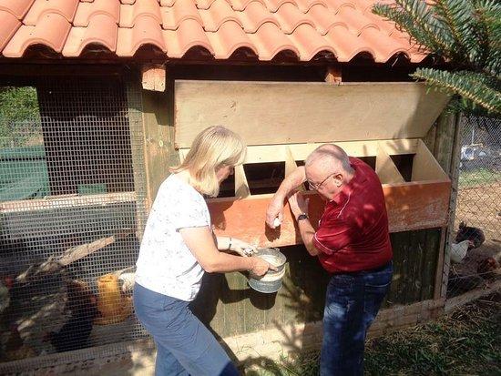 Cooking Class on Karaiskos Farm: Fresh eggs