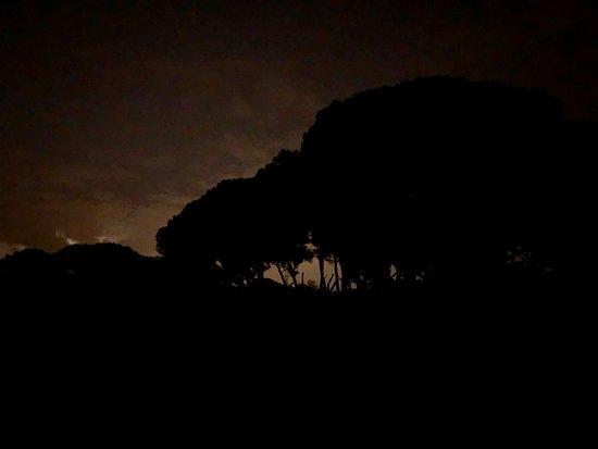 Con luna llena, el bosque es espectacular
