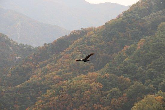 Danyang-gun, Južna Koreja: fall foliage