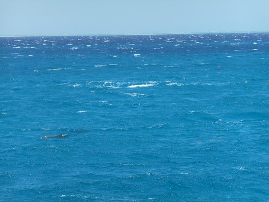 Royal Dolphin House: one dolphin spotted !!