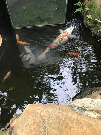 Fishes attacking a butterfly at the Butterfly world of Edinburgh- 19 oct 2019