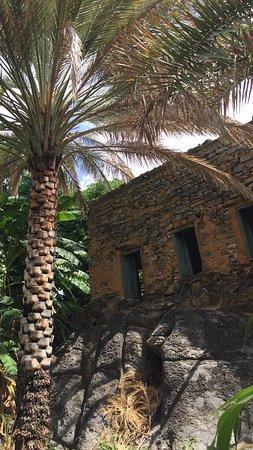 نخلل و بيت قديم