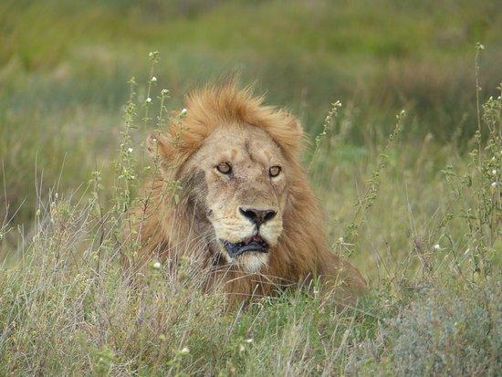 4 Nights 5 Days Camping Safari Itinerary: Lion King