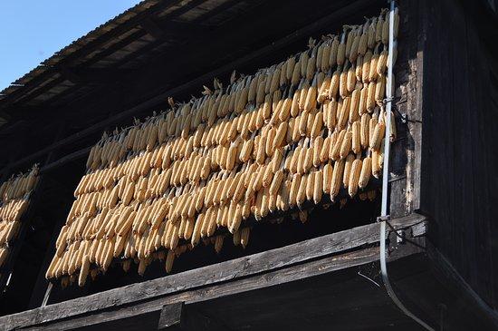 Kumrovec, Κροατία: Corn hanging to dry