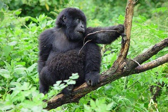 3 Day Gorilla Trekking Budget Safari...