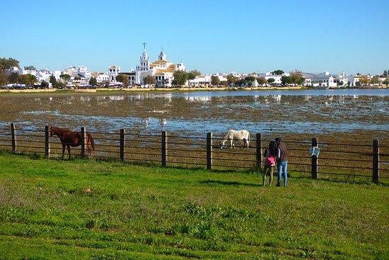 Nationaal park Doñana in 4x4 en El ...
