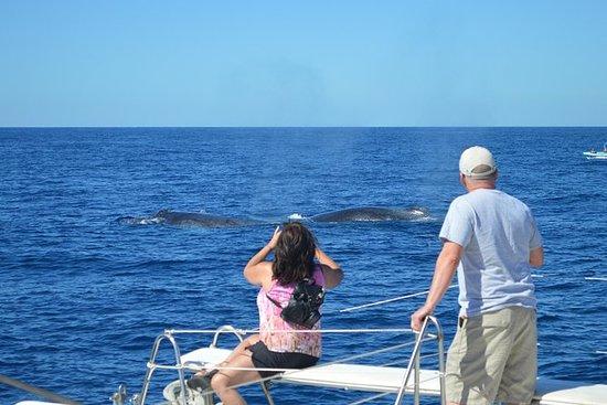 EcoCat賞鯨冒險ECO類照片