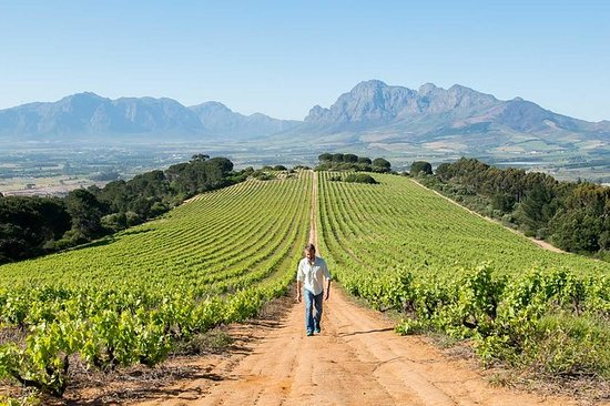 "Constantia Winelands ""The Simon Van Der..."