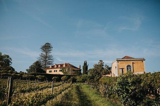 马夫拉(Mafra)的葡萄园品尝葡萄酒(里斯本30公里)