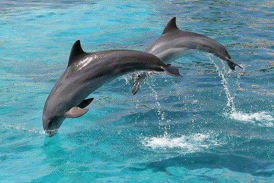 Avistamiento de delfines...