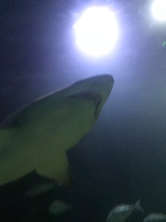 Deep sea world reviews