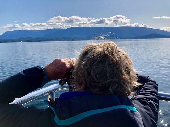 Half-Day Whale Watching Adventure from Telegraph Cove: op de uitkijk