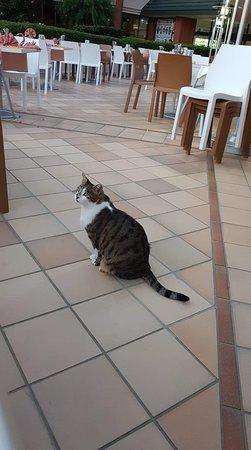 Żebrający kot