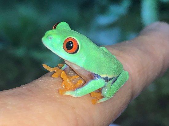 Japan Amphibian Laboratory