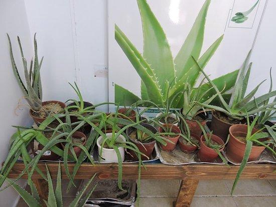 Just Aloe Visitor Center